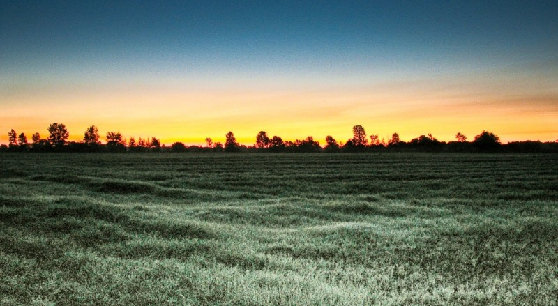 Dawn over frosted pasture.