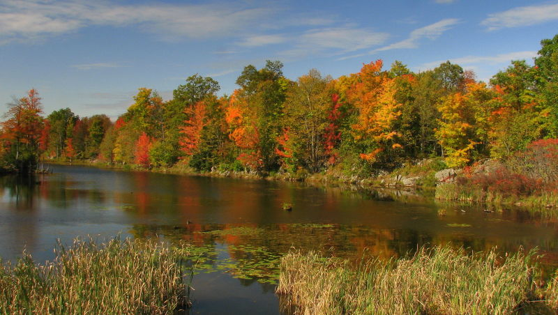 Maples in colour on lakes edge.