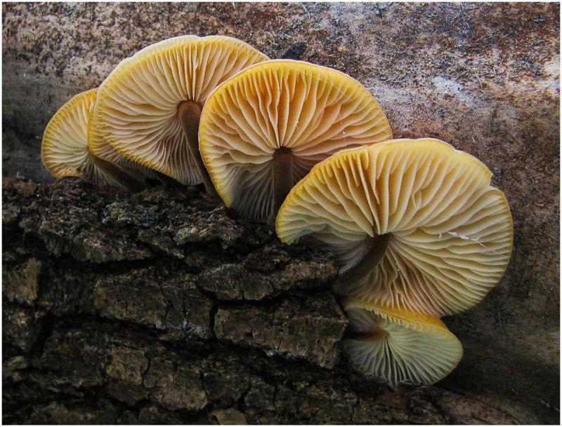 Mushrooms on side of log