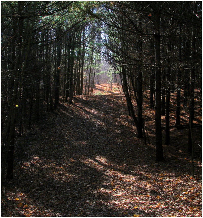 Path through the woods.