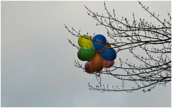 Balloons caught in tree.