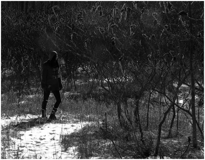 Walk in the winter woods.