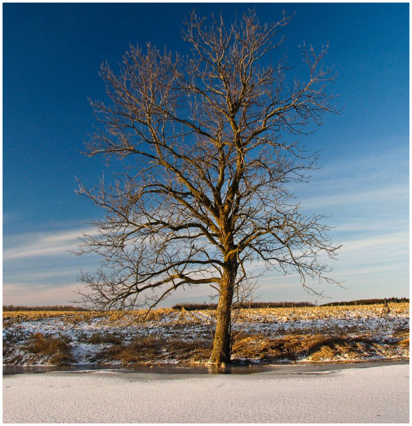 Lone tree on shore of creek.