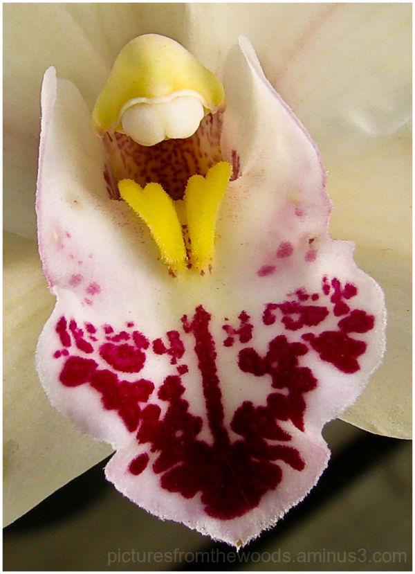 Orchid in bloom.