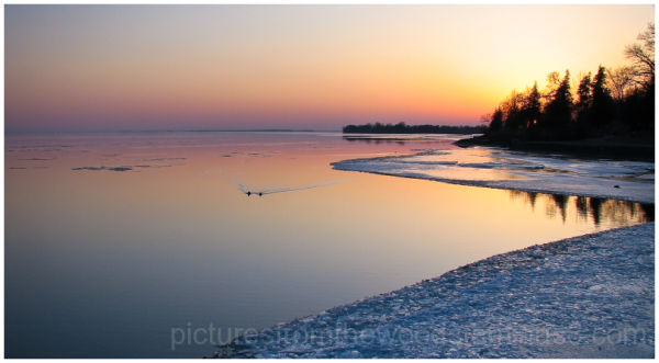Two ducks take a swim along the shore of icy lake.