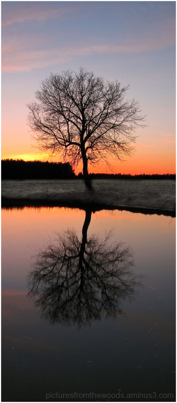 A tree reflects in the sunset.