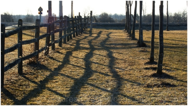 Early morning shadows along a fence.