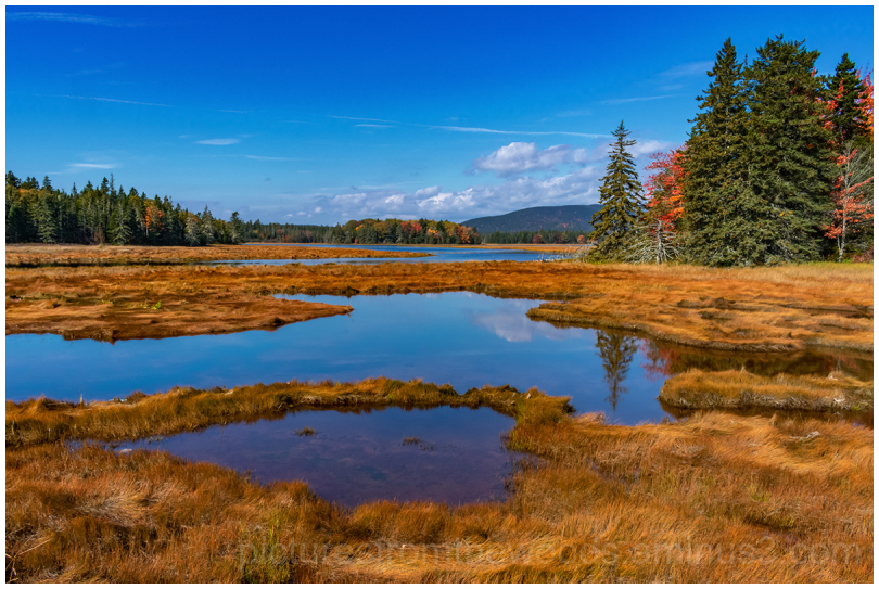 Fall colours in a marsh.
