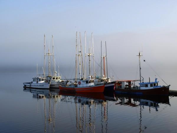 coal harbor boats