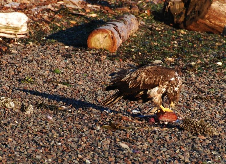 eagle dinner