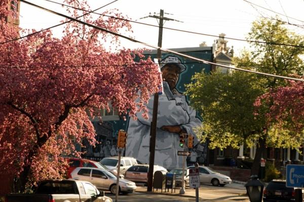 Cherry Blossom Mural Art