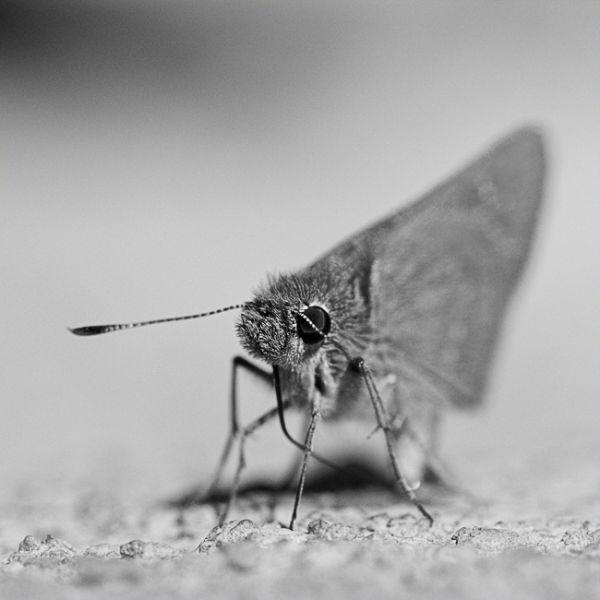 Grumpy Butterfly