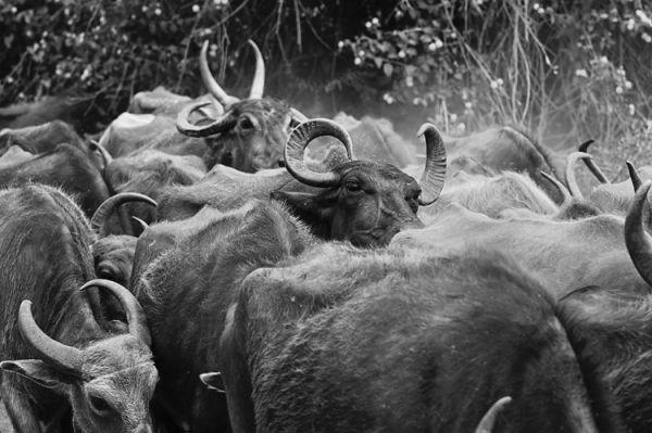 My Herd