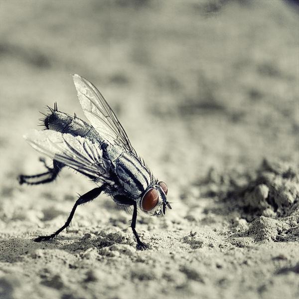 Fly Calisthenics