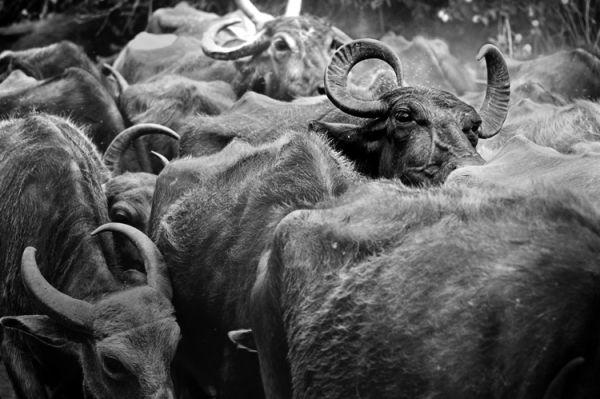 My Herd - 2