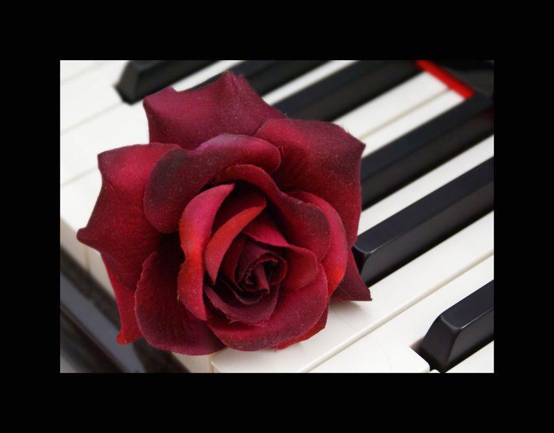 la flor de la música