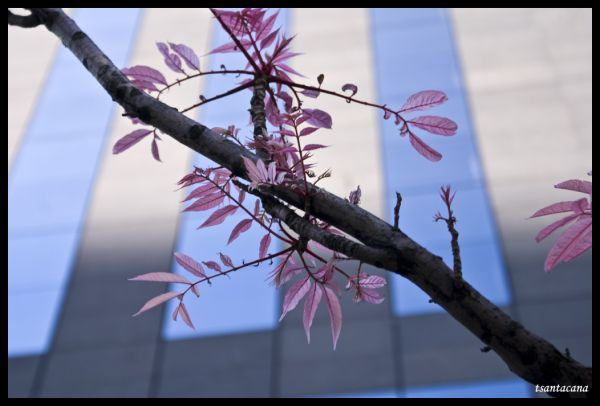 Flor de primavera_La Defénse (París)