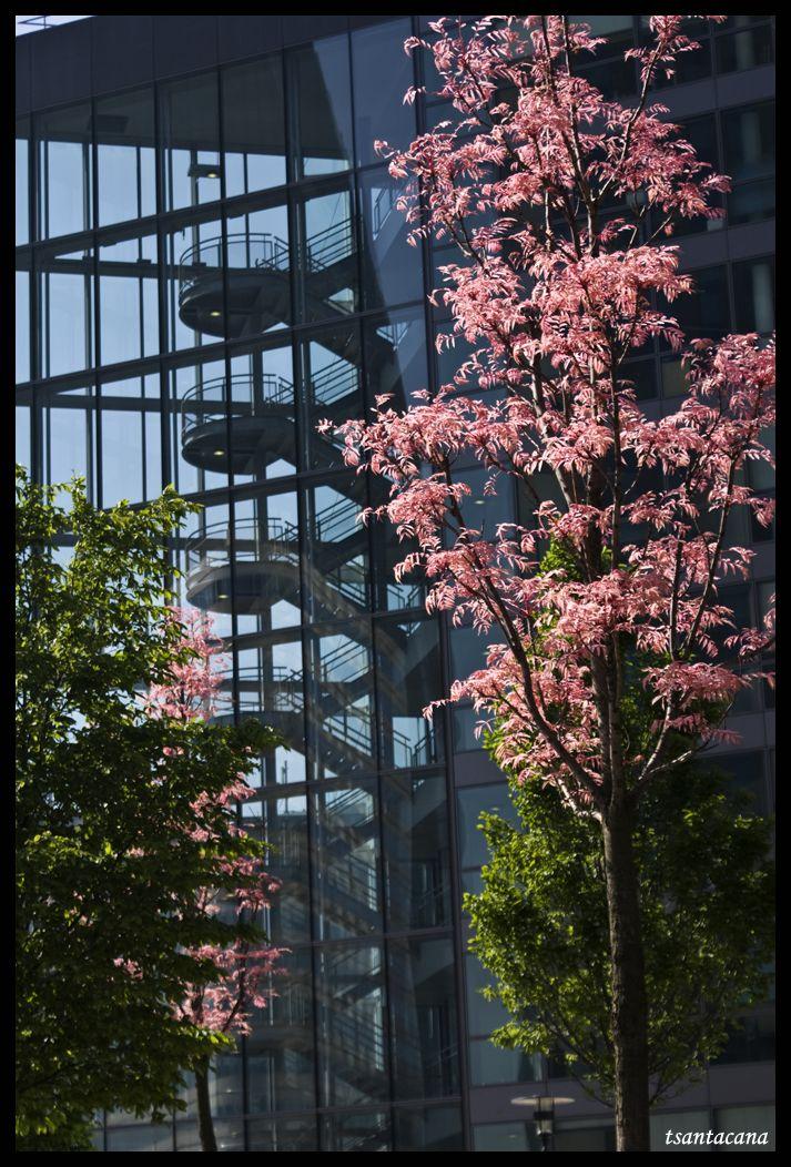 Primavera a La Defénse (París)