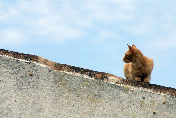 Moix dalt la teulada (Torret-Menorca)