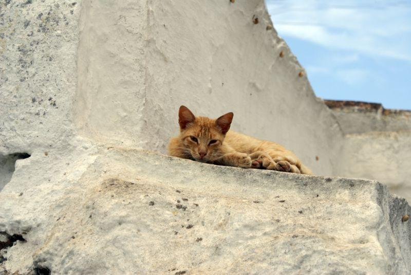 Moix dalt la teulada_2 (Torret-Menorca)