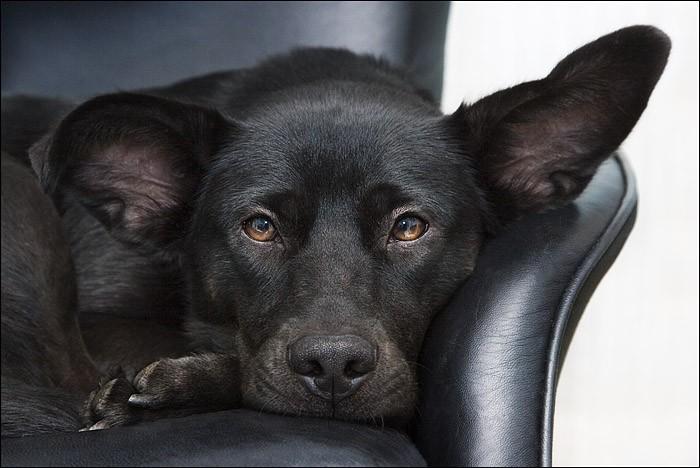 Mika dog