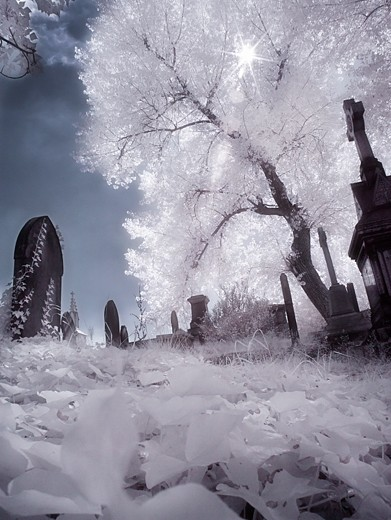 infra red graveyard
