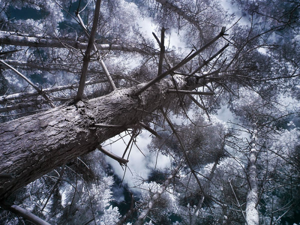 infrared, tree