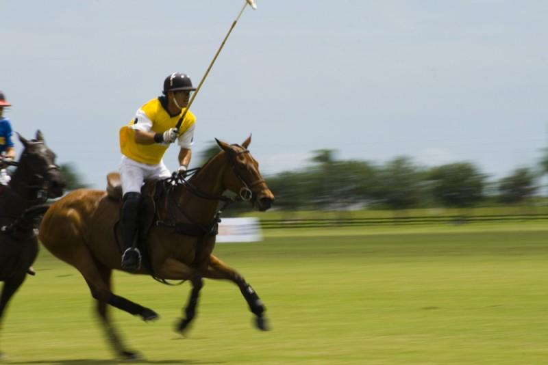 Polo Match in Sarasota, FL