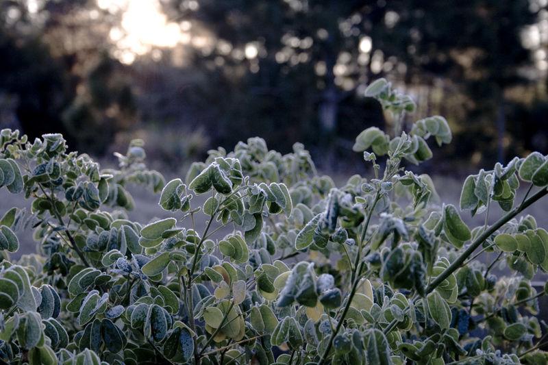 Frost in Southwest FLA