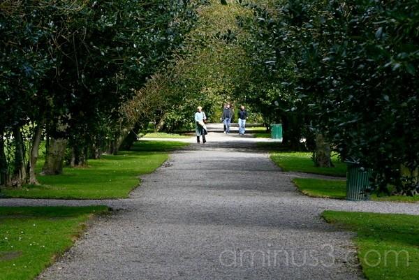 Main Thoroughfare  - Iveagh Gardens