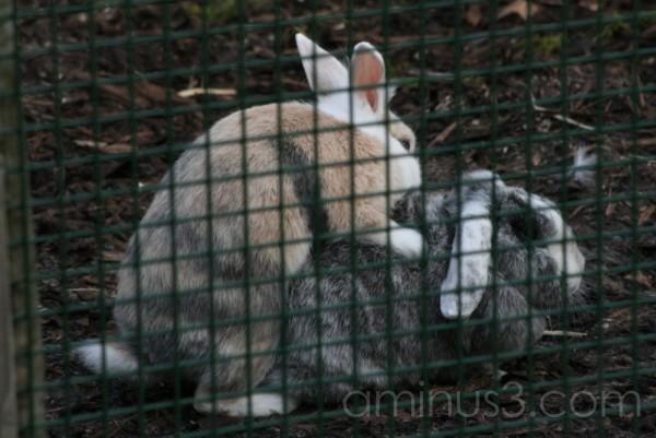 Rabbits - sorry
