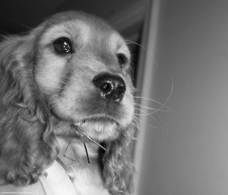 New Puppy 2