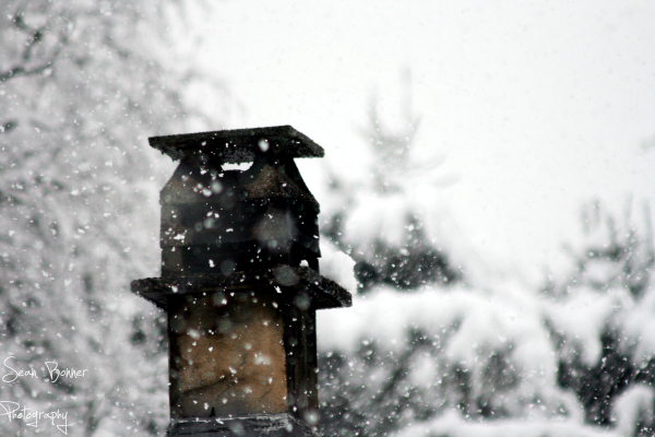 Birdhouse covered in snow