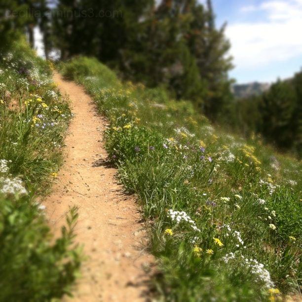 tilt-shift trail