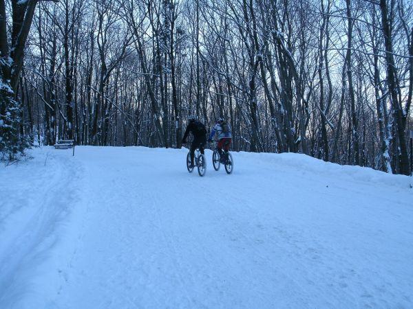 Mont-Royal en hiver