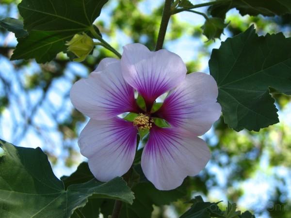 Purple flower against sky