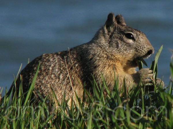 Squirrel Eating - 4