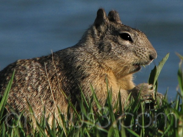 Squirrel Eating -