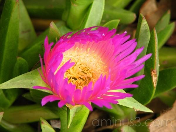 windswept flower
