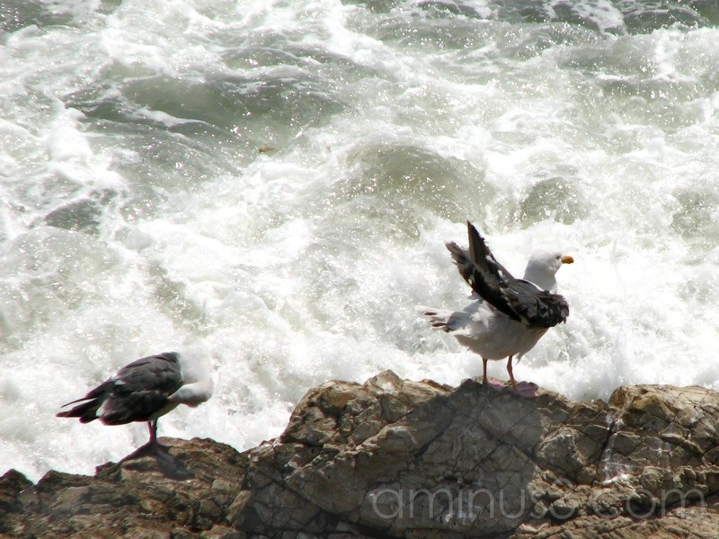 2 seagulls about to get wet