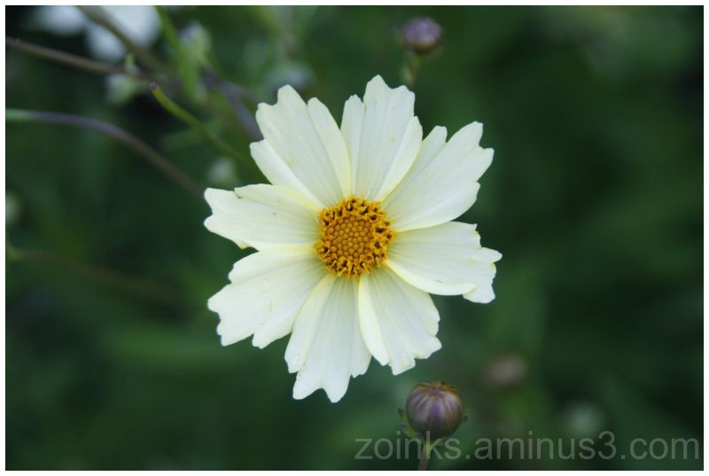 niagara park flower