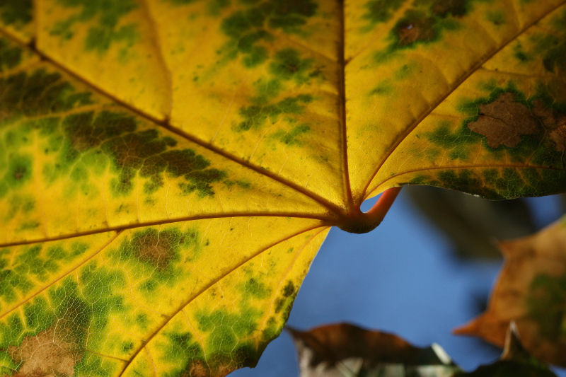 Variations on a Leaf 2