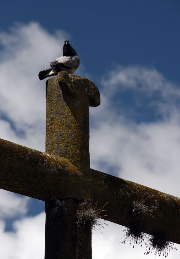 Pigeon Cross