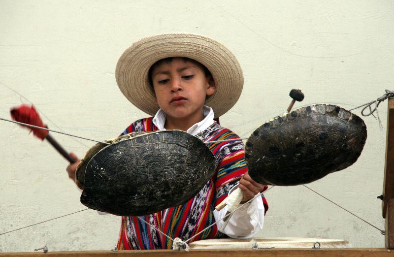 Turtle Drums