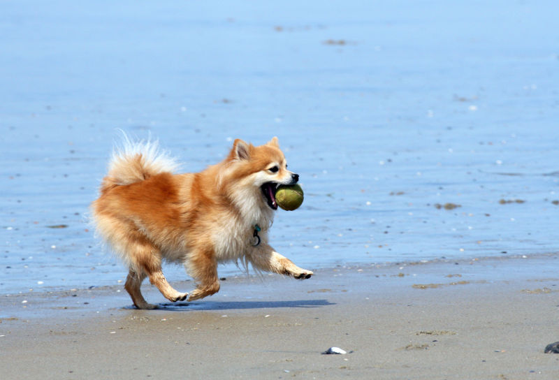 I Got the Ball!!!