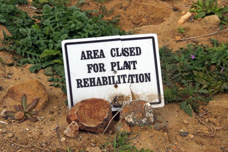 Plant Rehab ?