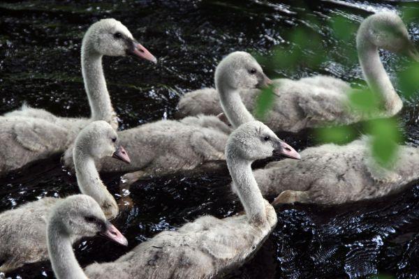 Ugly Ducklings???