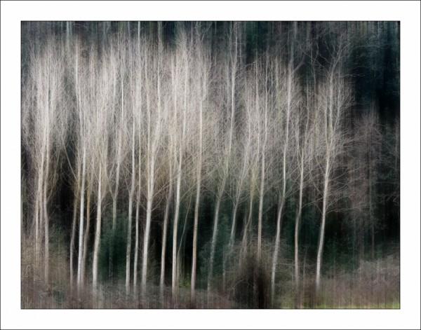 Bosc de Ginestar