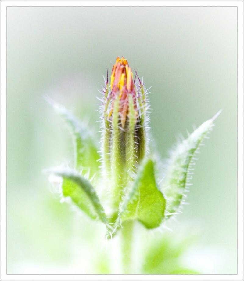 flor del pati de casa