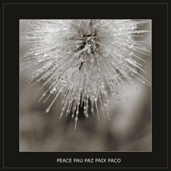 peace paz paix pau